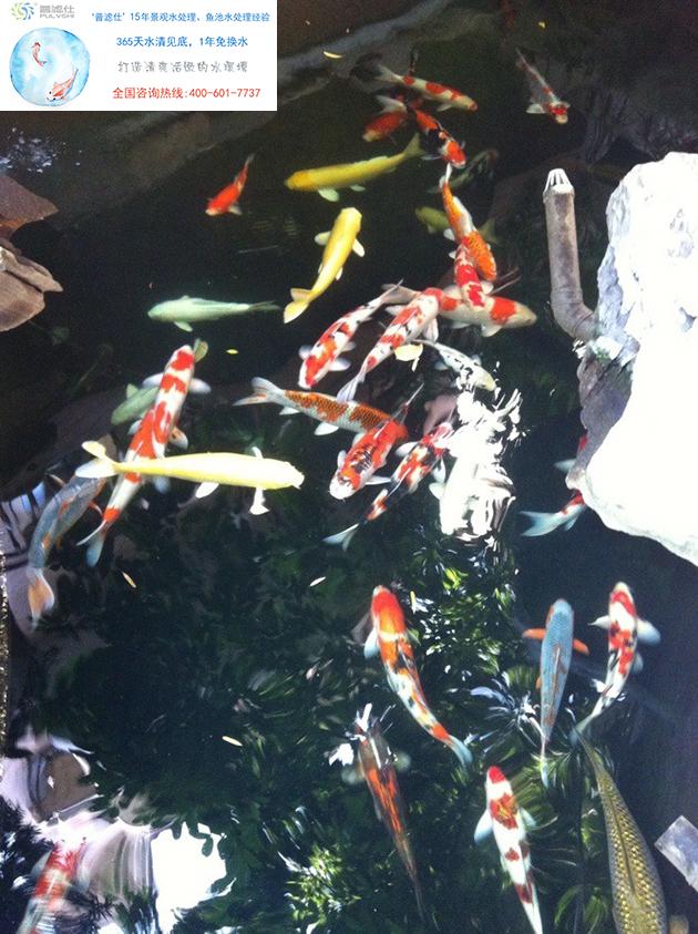 鱼池水处理系统