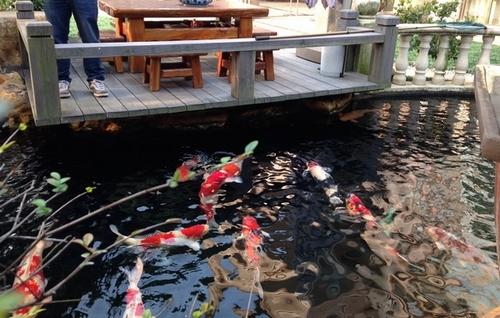 景观水处理后水清效果一直保持