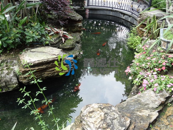 景观水处理的40平方鱼池