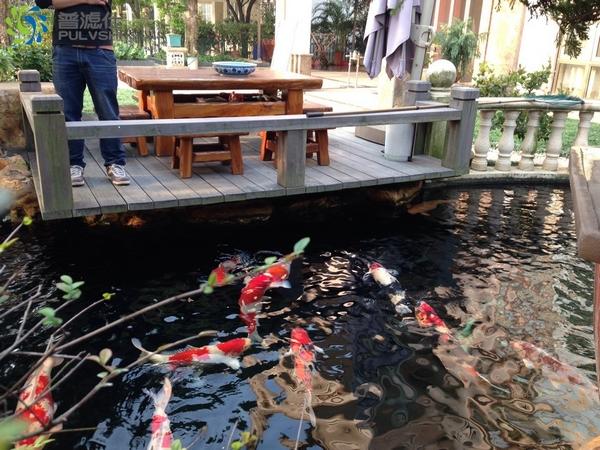 6年前做的景观水处理,鱼池还是保持清澈