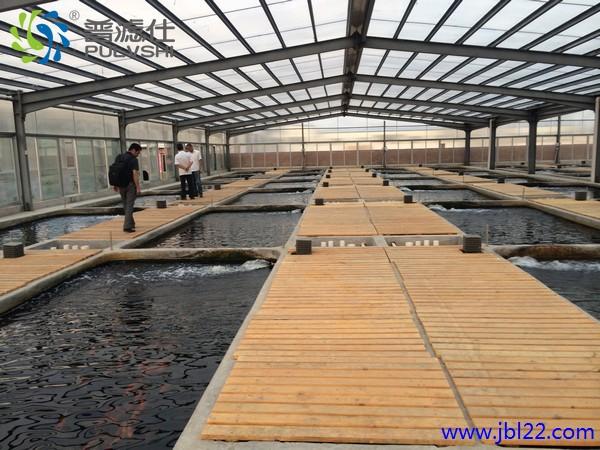景观水生态处理,为鱼创造宛如水生态环境