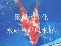 景观水净化,水好鱼好风水好