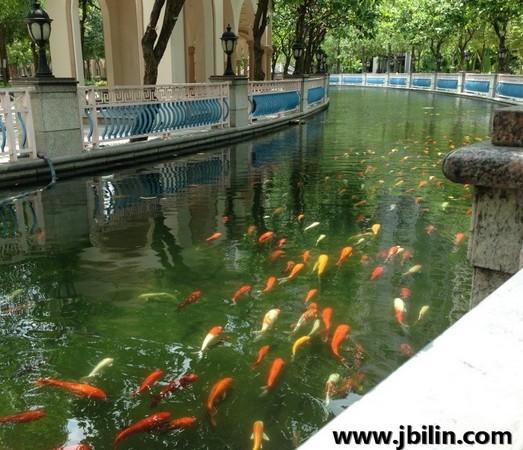 小区景观水池想保持昔日美景需做小区景观水处理