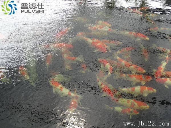 春季已至,做好鱼池景观水处理