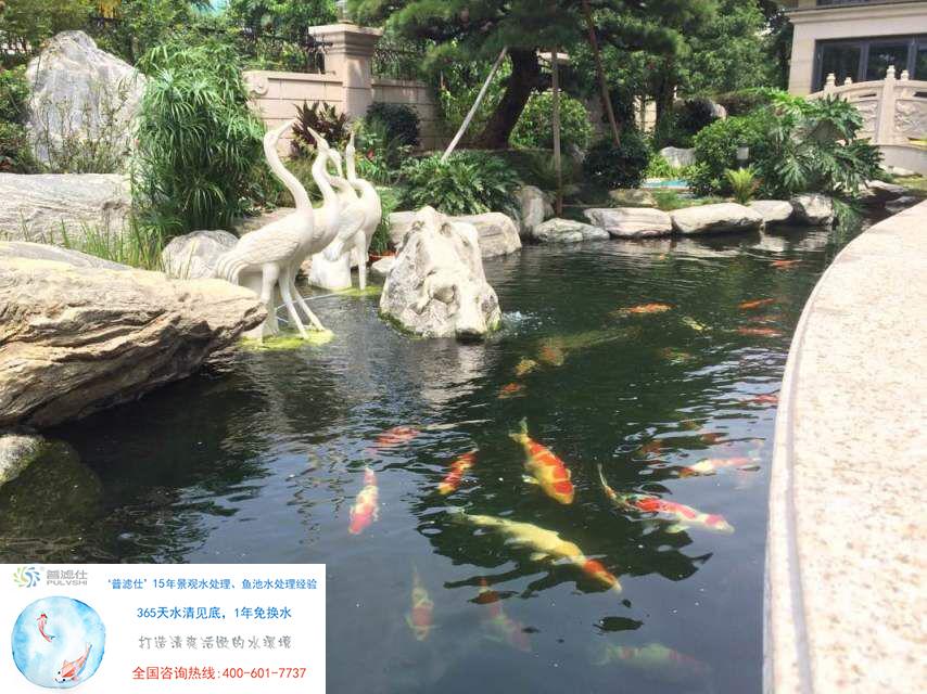 金碧林鱼池景观水处理 获得了广州客户的选择