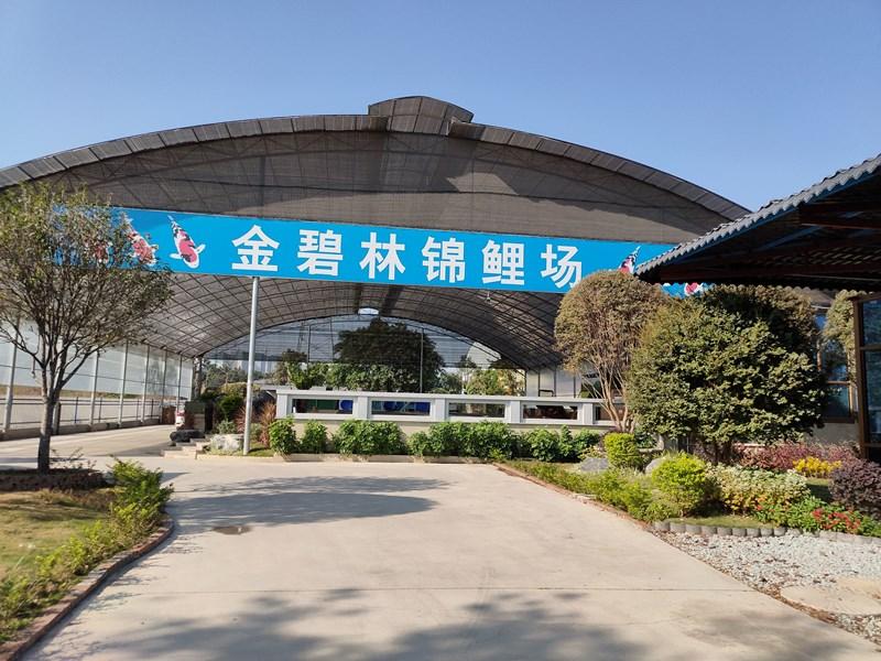 广东金碧林锦鲤养殖场--鱼场案例